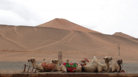 Travel the Silk Road. Photo by Christy Warren